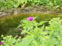 Flower by the pond